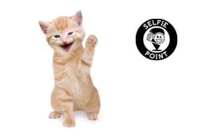 Selfie mit Katzen